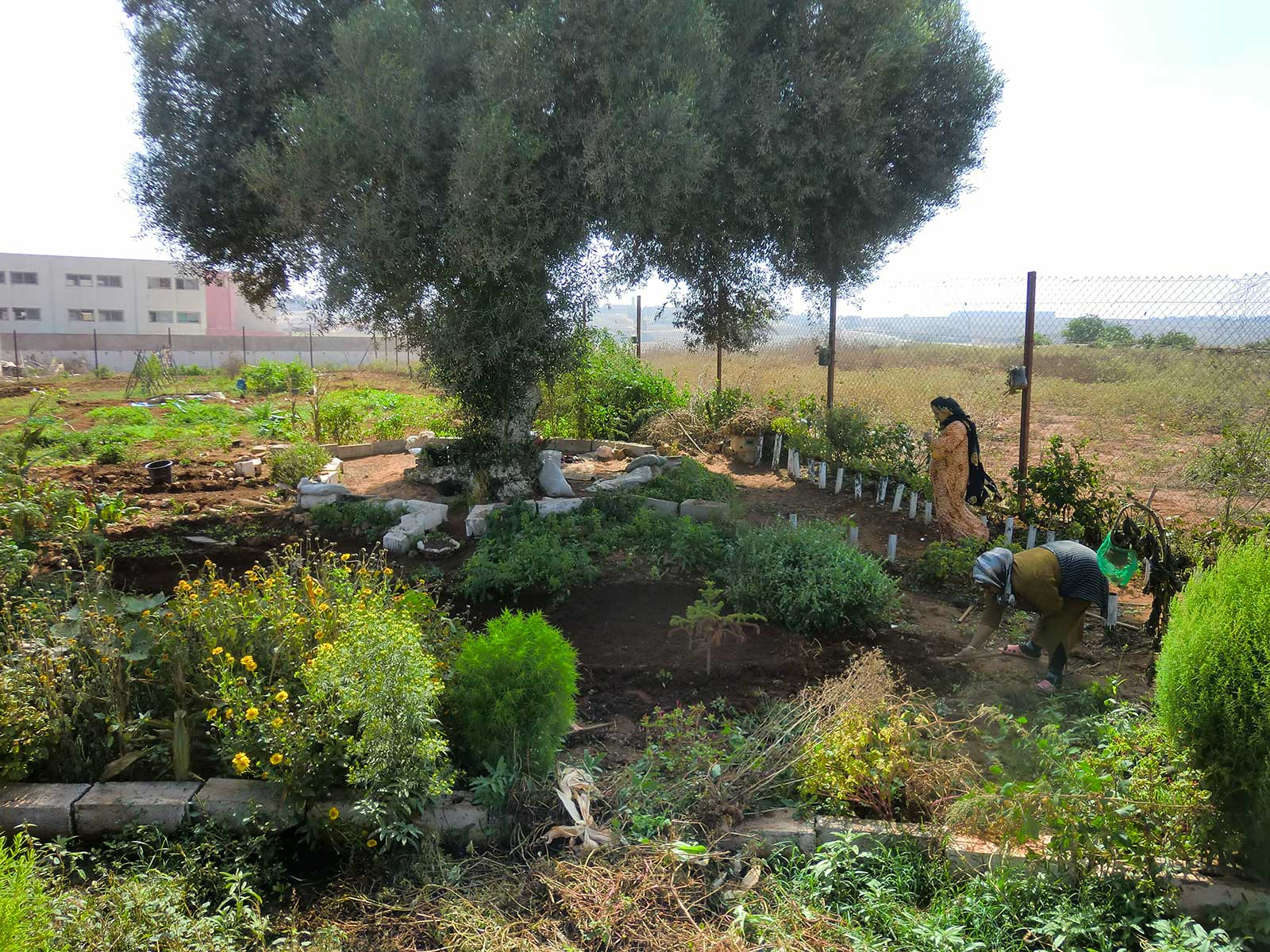 Water recyc­ling for urban gardening